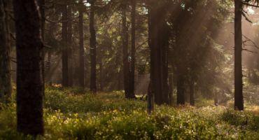 Ziemeļlatgalē taps 5 dabai veltīti vides objekti