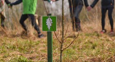 Gatavojoties Latvijas simtgadei, Kārsavā plāno iestādīt simts ozolus