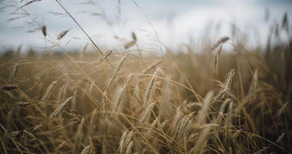 8. martā Rēzeknē notiks seminārs par bioloģisko lauksaimniecību