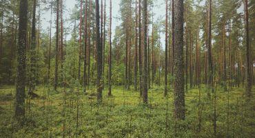 Iedzīvotāju ievērībai – informācija par nelikumīgām mežu cirtēm