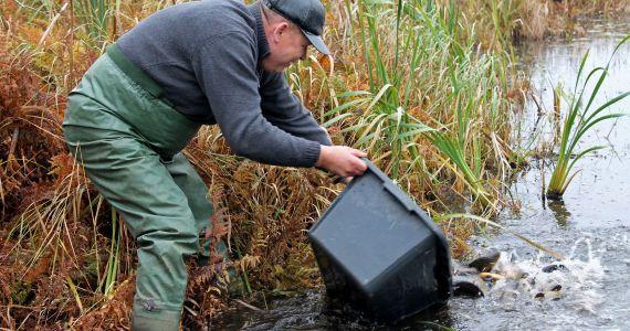 Zivju resursu atjaunošana Kārsavas novada Nūmērnes ezerā