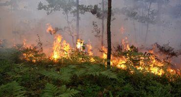 Meža ugunsnedrošais laikposms sākas 1. maijā
