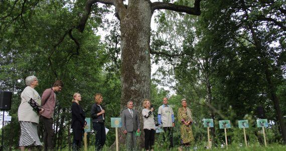 Līdz Latvijas valsts simtgadei aicina saskaitīt Latvijas dižkokus