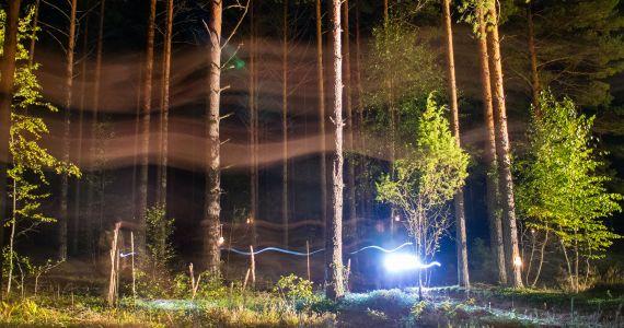 Nakts sēņošana – tavs maģiskais piedzīvojums mežā!