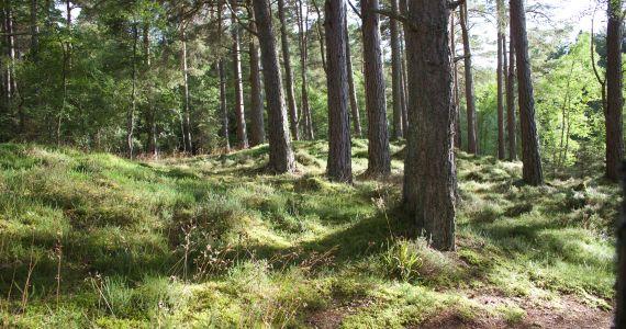 Seminārs par ES un valsts likumdošanas izmaiņām lauku un mežu apsaimniekošanā