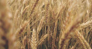 Tradicionālā Lauksaimnieku balle jau šonedēļ pulcēs zemniekus