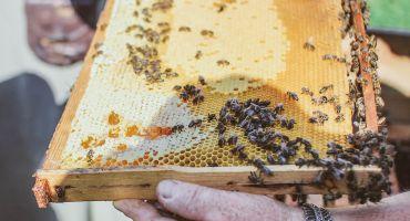 Biškopji īpašā akcijā cienās skolēnus un bērndārzniekus ar medu