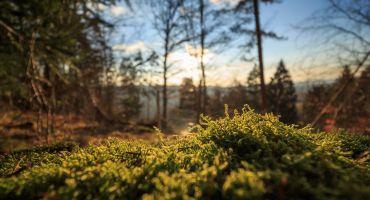 Krīzes vadības padome atzīst valsts mēroga dabas katastrofu mežsaimniecībā