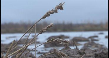 Zemnieki Latgalē aizvien izjūt plūdu sekas