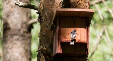 """Putnu būrīšu darbnīcu dabas parkā """"Numernes valnis"""""""