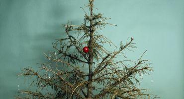 Svētki godam nosvinēti, bet kur lai liek ziemassvētku eglīti?