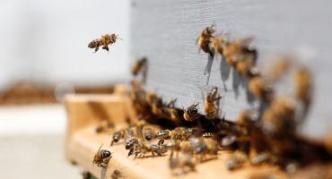 Rēzeknē notiks IV Starptautiskā Latgales reģiona biškopju konference