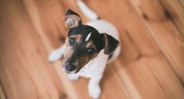 Turpmāk īpašniekiem suņi ar mikroshēmu jāapzīmē un LDC jāreģistrē līdz suņu 4 mēnešu vecumam