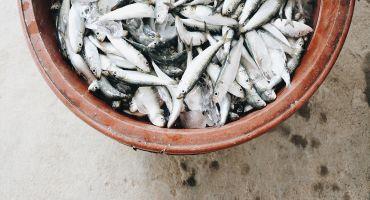 Ministrs Kaspars Gerhards aicina zivsaimniekus aktīvāk izmantot ES finansējumu nozares attīstībai
