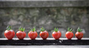 Precizēti atbalsttiesīgie pasākumi un nosacījumi ES atbalsta saņemšanai augļu un dārzeņu ražotāju organizācijām
