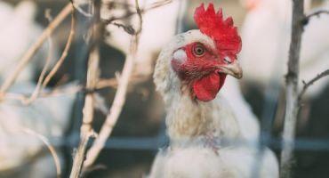 Atbalsts putnkopības nozarei profilaktiskajiem pasākumiem
