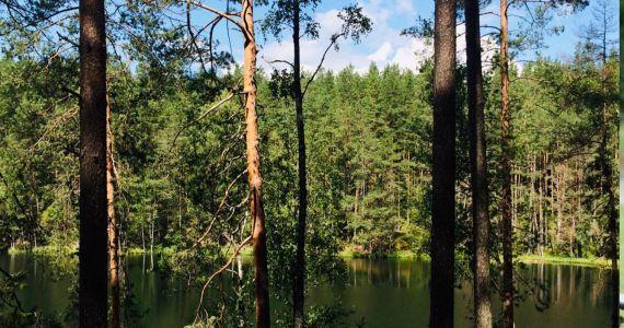Ielūkoties mežsaimniecības nākotnē