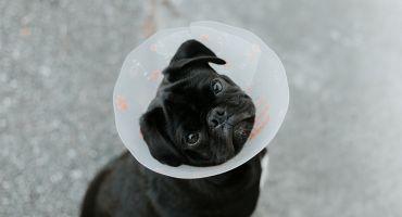 Kur meklēt licencētu veterinārārstu?