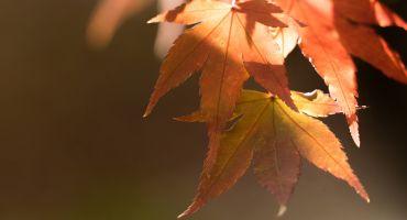 Pastaiga kopā ar rudeni